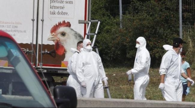 الحكومة النمساوية: أكثر من 70 جثة في شاحنة للاجئين