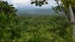 البرازيل: غابات الأمازون الماطرة في تقلص سنوي