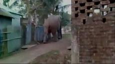 شاهد: فيل هائج يدمّر البيوت في الهند