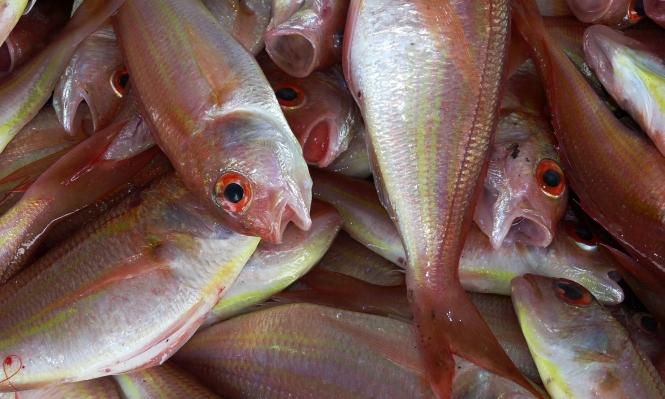 لهذه الأسباب... الملايين محرومون من تناول السمك بحلول 2050