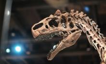إعادة الحيوانات المنقرضة... بين خيال العلماء وواقع العلم!