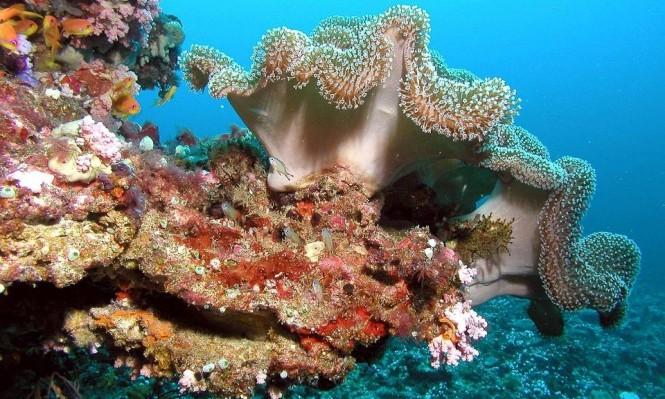 اكتشاف مرجان قادر على إنتاج أشعة الشمس ذاتيا
