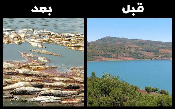 مجزرة اسرائيلية بيئية بحق بركة الرام في الجولان المحتل
