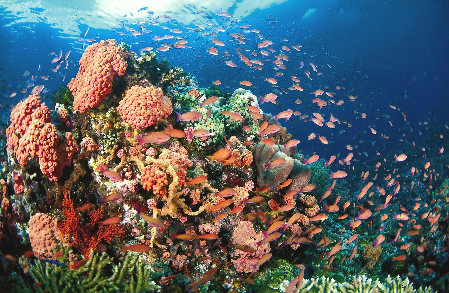 موجة انقراض لا مثيل لها في السابق تهدد الأنواع البحرية