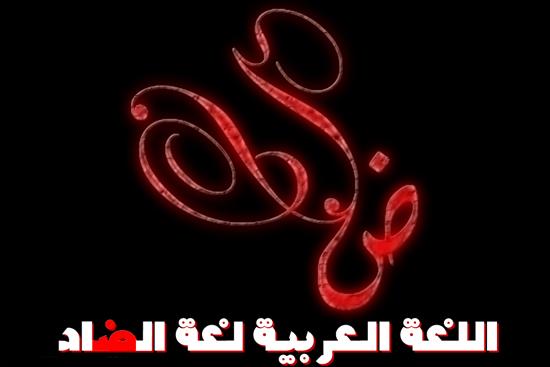 آرنس: إلغاء مكانة اللغة العربية يتناقض مع دمج العرب في المجتمع الإسرائيلي
