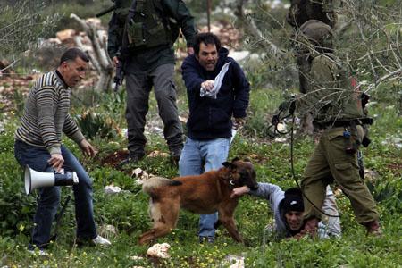كلب بوليسي يهاجم ويعض الأسير عبد الله البرغوثي