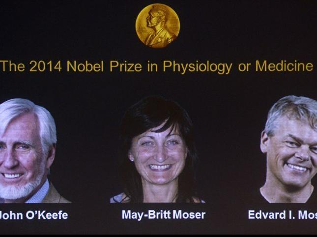 """جائزة نوبل للطب للعام 2014 إلى ثلاثة باحثين اكتشفوا جهاز """"GPS"""" في الدماغ"""