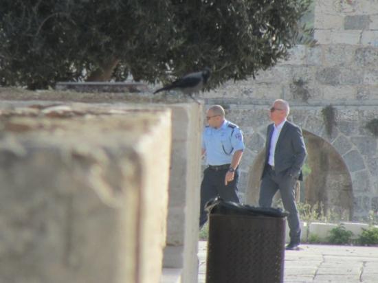 رئيس بلدية الاحتلال بالقدس يقتحم الأقصى تحت حراسة الشرطة