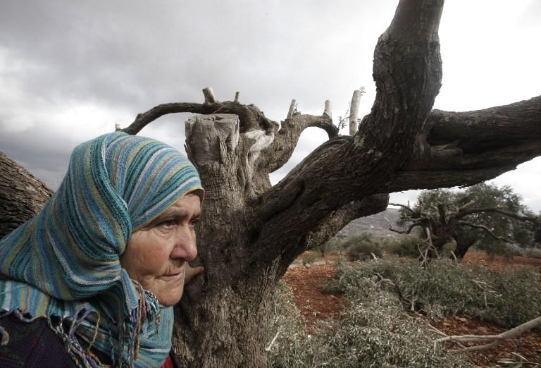 92% من شكاوى الفلسطينيين ضد المستوطنين وقوات الاحتلال تذهب أدراج الرياح