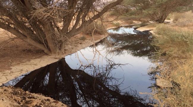 تسرب النفط في شمال إيلات تسبب بكارثة بيئية