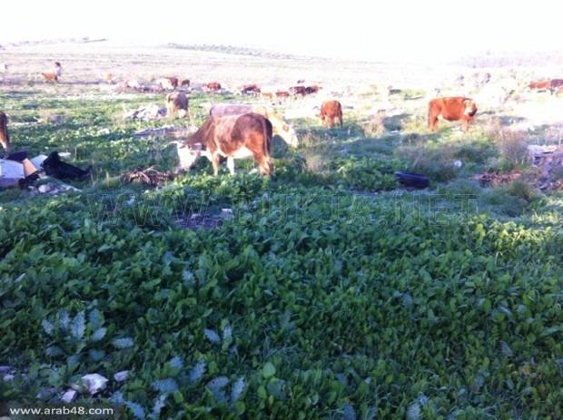 إسرائيل تنتهك اتفاقية الروحة وأمر عسكري لملاحقة المزارعين
