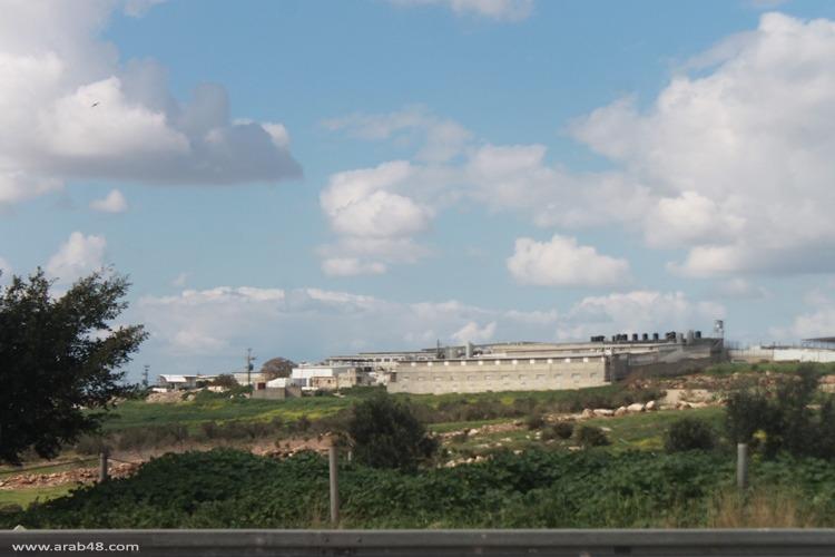 مزرعة الخنازير مستنقع لتلويث بيئي وصحي في الجليل