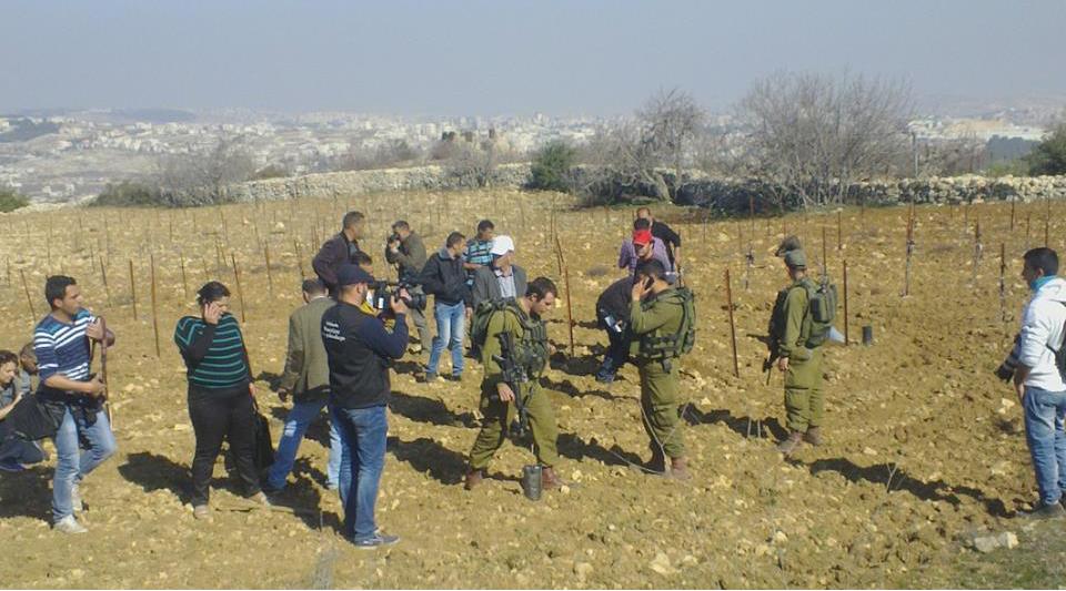 اعتداءات المستوطنين: طعن في القدس واقتلاع في الخضر