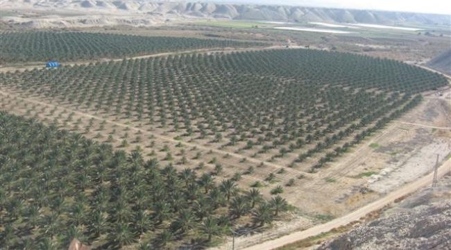 المحكمة العليا تنظر بالتماس فلسطينيين ضد سرقة أراضيهم بالأغوار