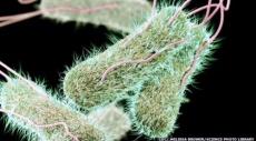 تحذيرات من انتشار مرض التيفوئيد المقاوم للعقاقير