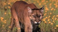 تضخم قائمة الأنواع المهددة بالانقراض في عام 2015