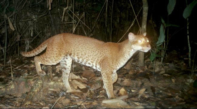22 ألف نوع من الحيوانات مهدد بالانقراض