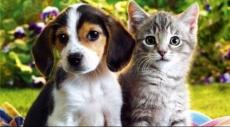الكلاب والقطط تحصل على حقوق المواطنين
