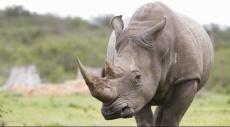 استنساخ أعضاء الحيوانات المهددة بالانقراض لحمايتها
