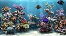 ما هو سبب وضع حوض الأسماك في العيادة