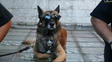إغلاق محطة نووية أميركيّة والسبب.. كلب