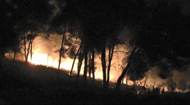 ترشيحا: إحراق كروم زيتون مرة ثانية وحالة استنفار بالبلدة