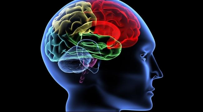 دراسة تحدد مسار اتخاذ القرارات في الدماغ