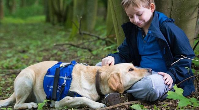 كلاب ذات قدرة على شم الخلايا السرطانية في خدمة أطباء بريطانيا