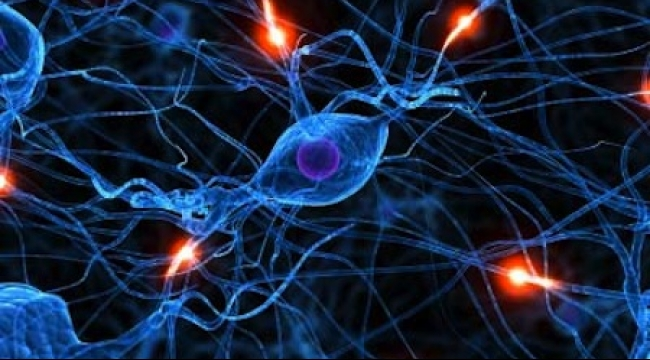 دراسة: نتائج واعدة لعلاج إصابات النخاع الشوكي بالخلايا الجذعية