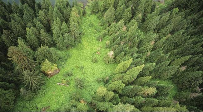 الأرض تكتسي بثلاثة تريليون شجرة لكنها تفقدها بمعدل مقلق