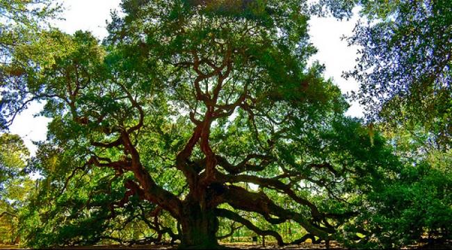 الجنس البشري يهدد بقاء الأشجار على الأرض