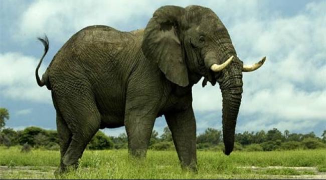 فيل يقتل مصورًا في سريلانكا