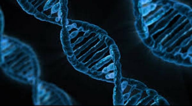 """بحث التعديل الجيني وولادة أطفال """"حسب الطلب"""""""
