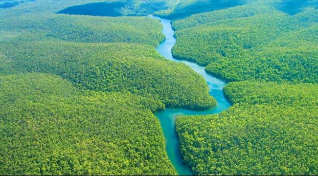مليار دولار من النرويج للبرازيل لتحافظ على غابات الأمازون