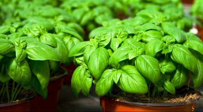 علاج نقص المغنيسيوم عن طريق الأعشاب