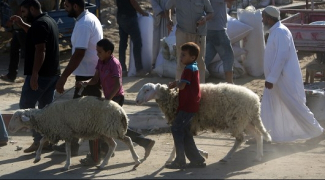 هموم غزة تُخفي بهجة عيد الأضحى من وجوه سكانها