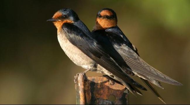 علماء يكشفون أسرار شجرة عائلة الطيور