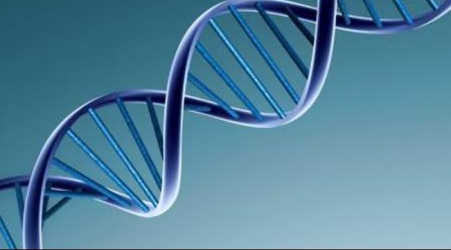 هل ينجح التعديل الجيني بزرع أعضاء الحيوان للإنسان ؟