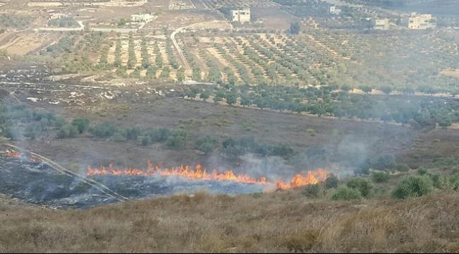مستوطنون يعتدون على مزارعين فلسطينيين ويضرمون النيران بأشجار الزيتون