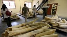 الصين تضرب تجارة العاج بيد من حديد