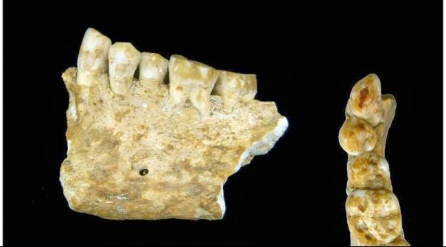 إكتشاف جد الإنسان الحديث بواسطة أسنان أثرية