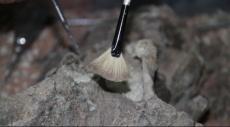 تركيا: العثور على أحفاير عمرها أكثر من 8 ملايين عام