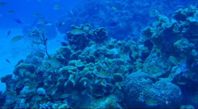 دراسة: كريمات الوقاية تسمم الشعاب المرجانية