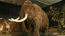 انقراض الثدييات الضخمة ترك آثارًا مدمرة على البيئة