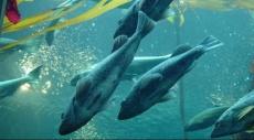 كيف يستفيد الإنسان من منظومة تطوير البصر عند الأسماك؟