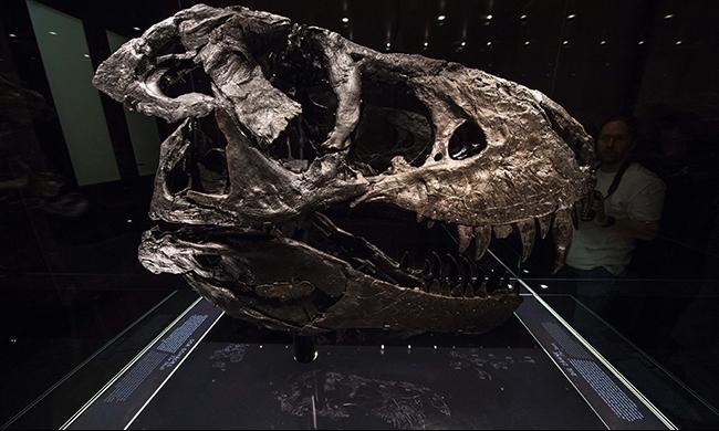 الولايات المتحدة تعيد جمجمة ديناصور إلى منغوليا