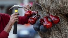 شجرة الحياة مقاومة توثّق للانتفاضة في بيت لحم