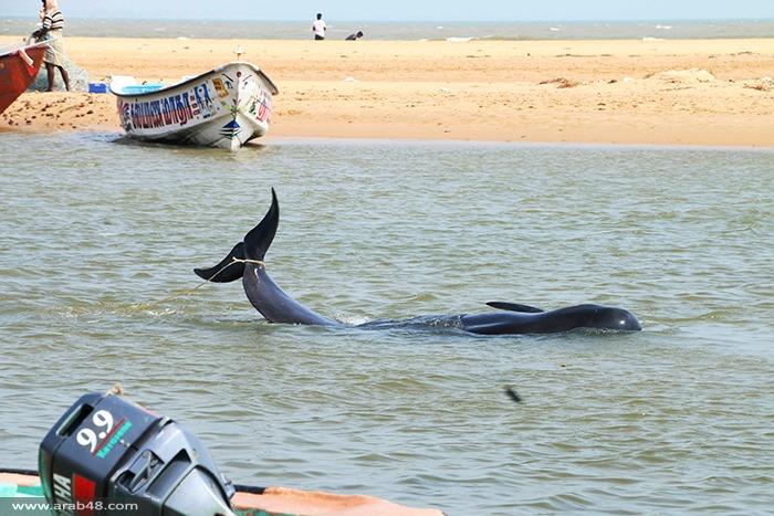 صور - الهند: الأمواج تجرف عشرات الحيتان