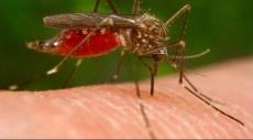 """الصحة العالمية تحذر من انتشار فيروس """"زيكا"""""""