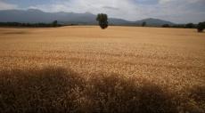 طهران: نسعى لتحصيل اكتفاء ذاتي لمحاصيل القمح